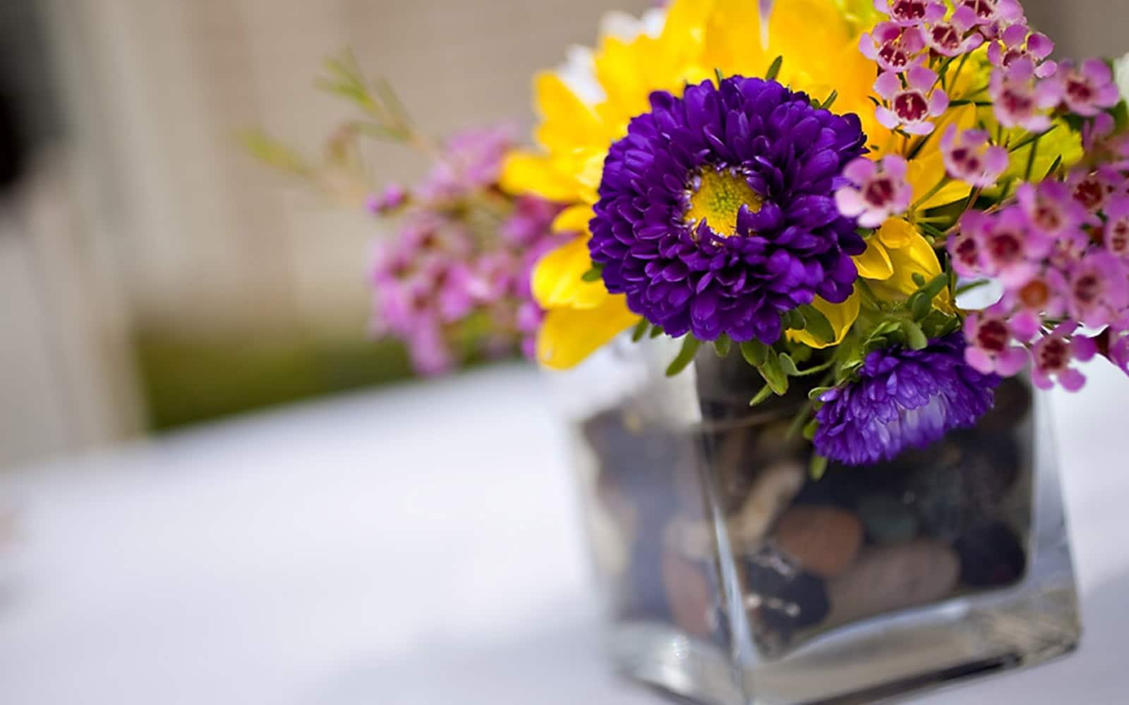 Close Up Of Flowers | Ventura
