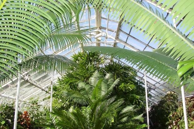 Conservatory Like Image