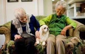 The Power of a Pet in Assisted Living