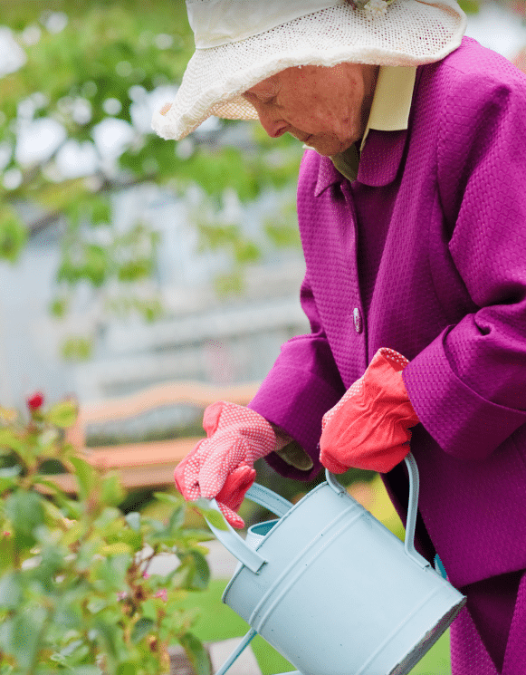 Elderly woman in hat, jacket and gardening gloves pouring from watering can into flowers